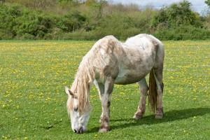 Equitop Myoplast feeding the older horse