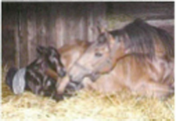 Mare with new foal