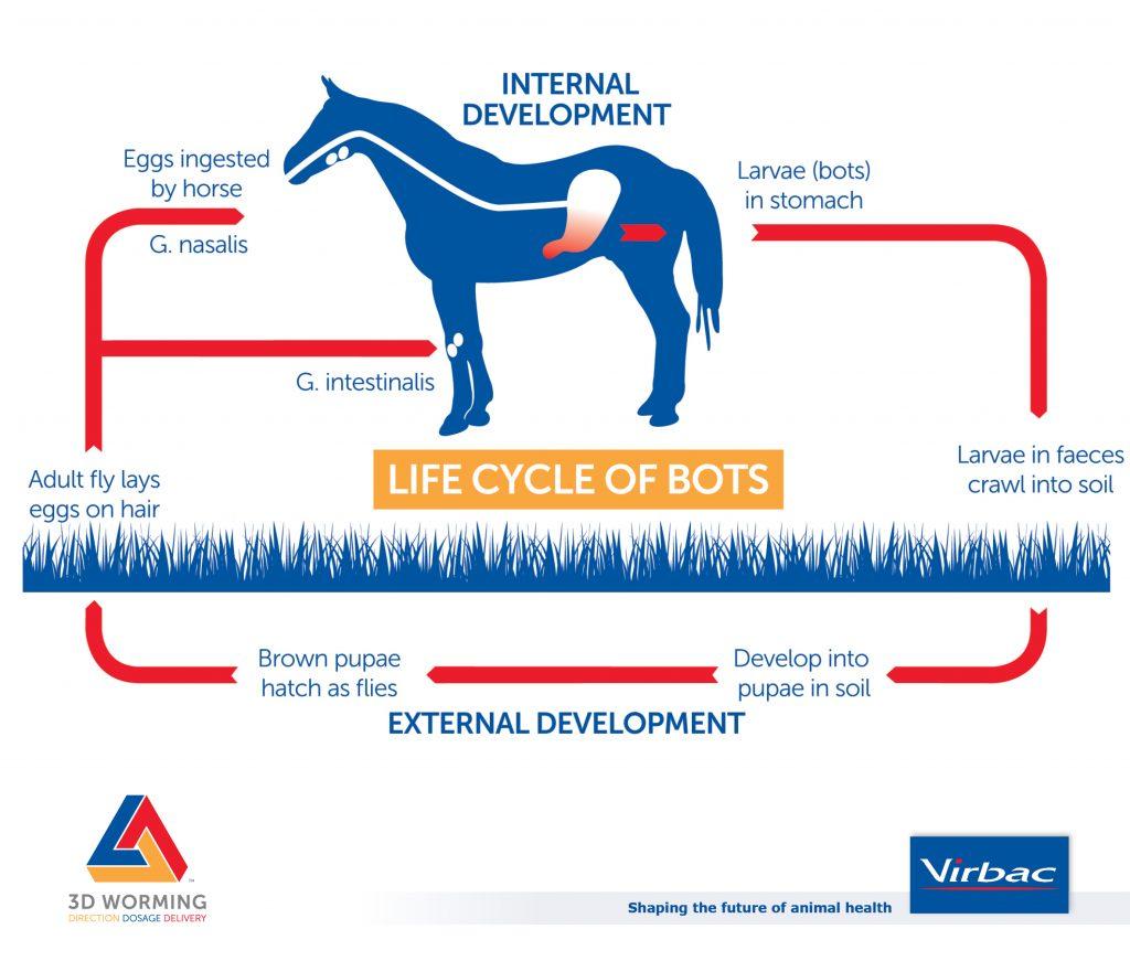 Bots Lifecycle