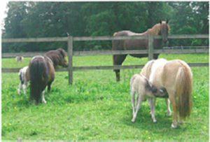Foals in Pasture