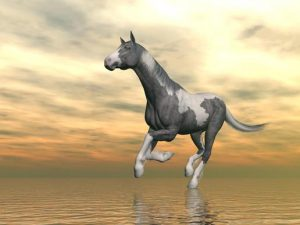 Beautiful gypsy vanner horse running upon water in front of cloudy sunset background