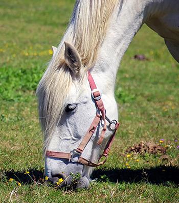 horse-feeding