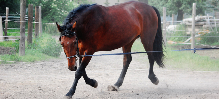 Top tips for successful horse training