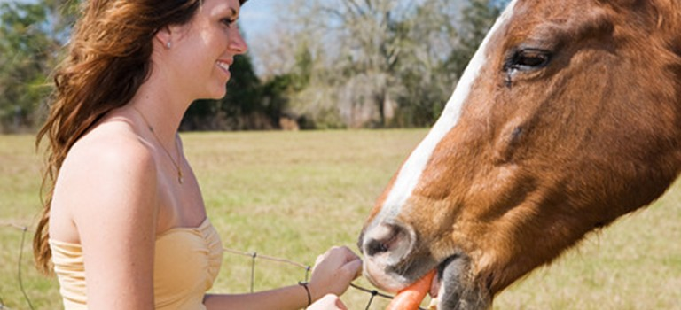 Your Horse and Treats