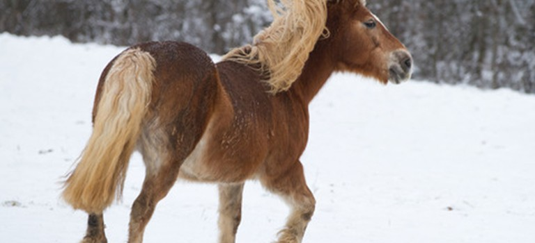 12 Tips for Keeping Your Horse Happy this Winter
