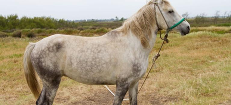 THE VETERAN HORSE – Care Through the Winter