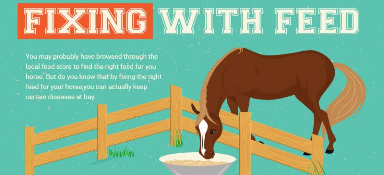 The Right Feeding Routine for a Happy and Healthy Horse
