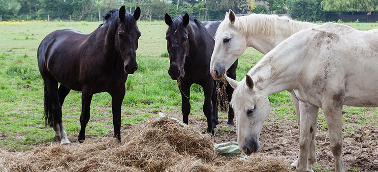 Mycotoxin Contamination and how it can affect your Horse