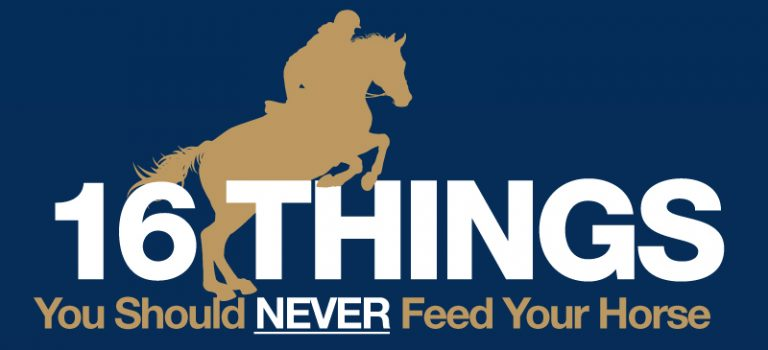 16 Things you Should Never Feed your Horse
