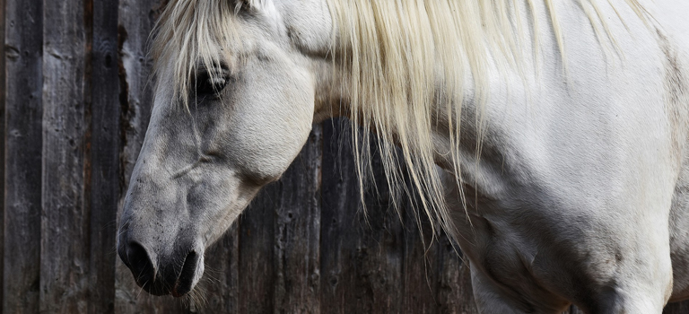 Equine Euthanasia: Time to Say Goodbye