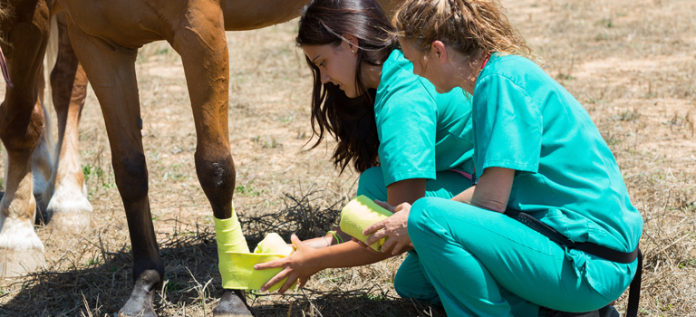 Advice and Bandaging Tips for Horses