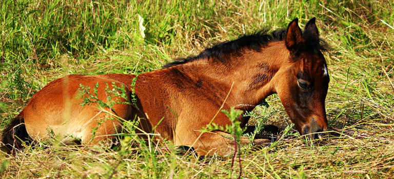 Caring for Your Foal – The Importance of Good Gut Health