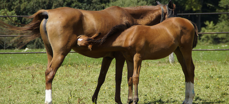 Your Foal's Health Vaccination and Worming of Your Foal