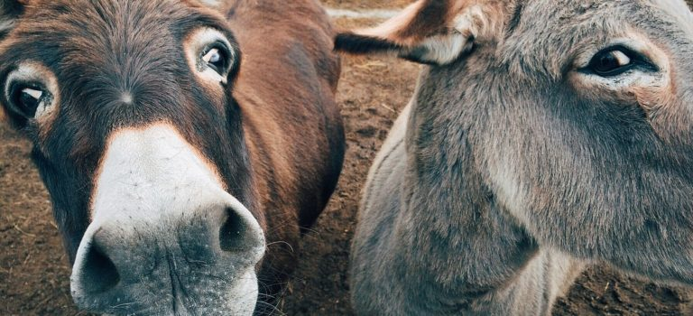 Maintaining Your Donkey's Health