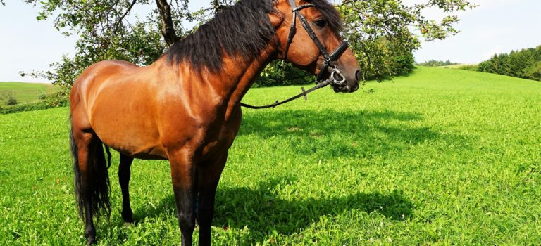 Equine Joint Health